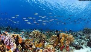 Bawah laut Pulau Komodo