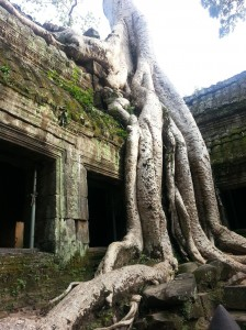 Root Outside the Ta Phrom